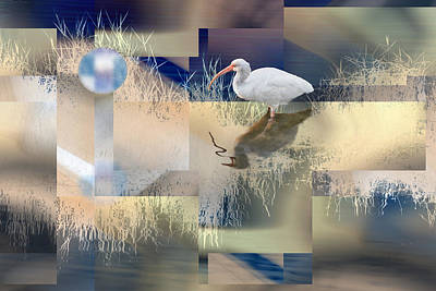 Once In A Blue Moon White Ibis Poster