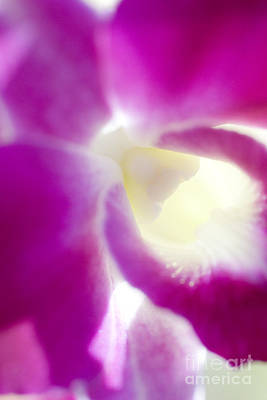 Orchid Abstract Poster by Ray Laskowitz - Printscapes