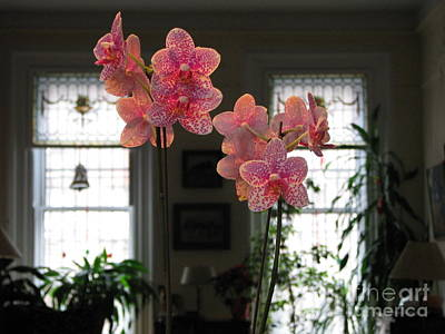 Poster featuring the photograph Orchids In The Parlor by Erik Falkensteen