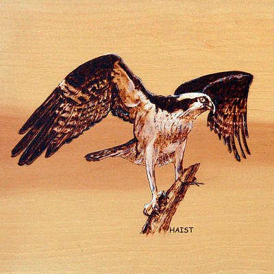 Osprey Poster by Ron Haist