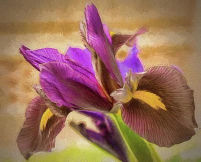 Painted Iris Poster