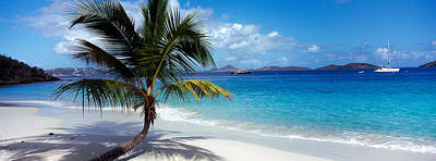 Palm Tree On The Beach, Salomon Beach Poster by Panoramic Images