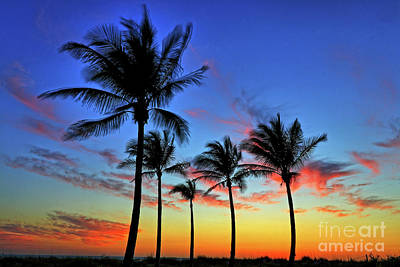 Poster featuring the photograph Palm Tree Skies by Scott Mahon