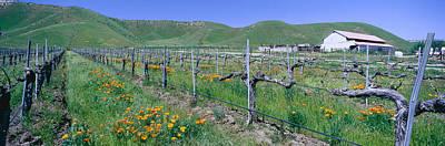 Panoramic View Of Golden California Poster