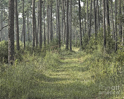 Path In The Woods Poster