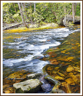 Pennsylvania Mountain Stream Poster
