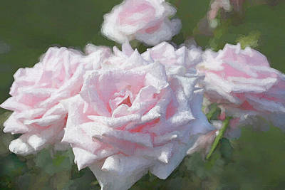 Remembrance Pink Roses Poster