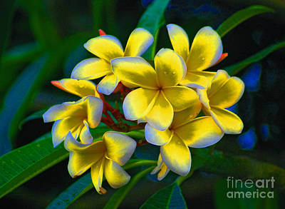 Poster featuring the photograph 1- Plumeria Perfection by Joseph Keane