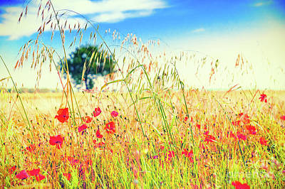 Poster featuring the photograph Poppies With Tree In The Distance by Silvia Ganora