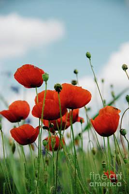 Poppy Field Poster by Jelena Jovanovic