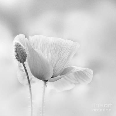 Poppy Impression Poster by Janet Burdon