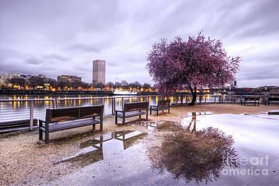Portland Oregon Waterfront Tree Reflection Poster