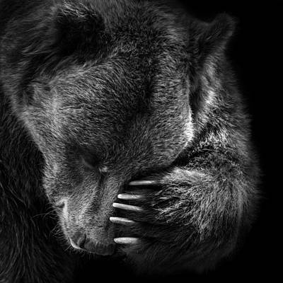 Portrait Of Bear In Black And White Poster
