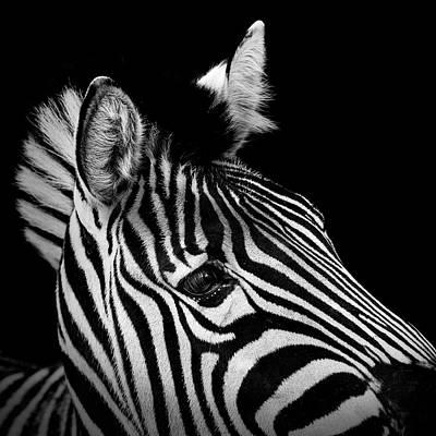 Portrait Of Zebra In Black And White II Poster
