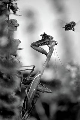 Praying Mantis And Honey Bee Poster