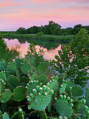 Prickly Pear Cactus Poster by Tim Fitzharris