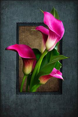 Purple Calla Lily Poster