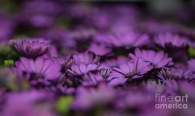 Purple Mood Poster