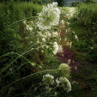 Queen Anne's Lace Poster by Bill Wakeley