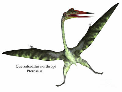 Quetzalcoatlus Reptile On White Poster by Corey Ford