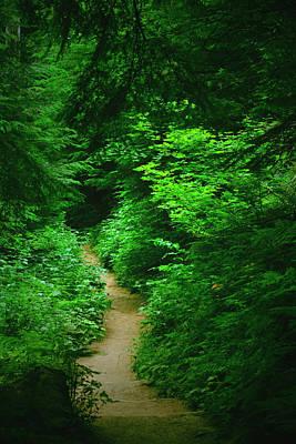 Rain Forest Walk Poster
