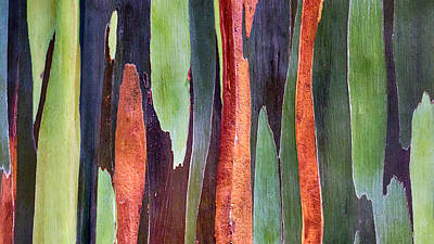 Poster featuring the photograph Rainbow Eucalyptus by Susan Rissi Tregoning