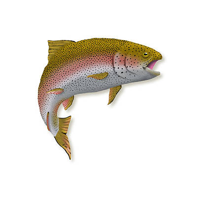 Rainbow Trout 1 Poster by Agustin Goba