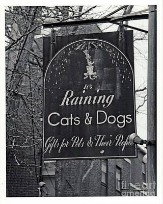 Poster featuring the photograph Raining Cats And Dogs by Juls Adams
