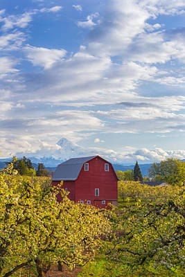 Poster featuring the photograph Red Barn And Mt Hood by Patricia Davidson