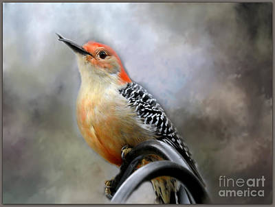 Red-bellied Woodpecker Poster by Brenda Bostic