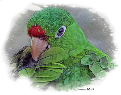 Red Lored Parrot Poster by Larry Linton