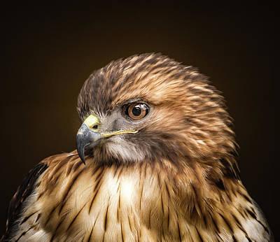 Redtail Hawk  Poster by Victor Hiltz