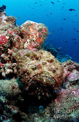 Reef Stonefish Poster