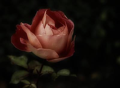 Romantic November Rose Poster