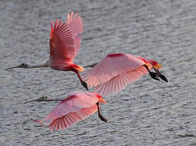 Roseate Spoonbill Poster by Jeanne Andrews