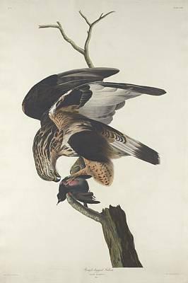 Rough Legged Falcon Poster by Anton Oreshkin