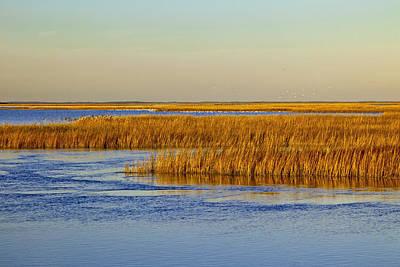 Salt Marsh In Autumn Poster