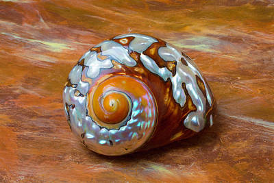 Sea Snail Shell Poster
