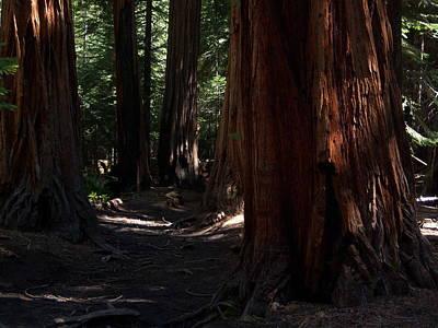 Sequoias On Half Dome Trail Poster by Bransen Devey