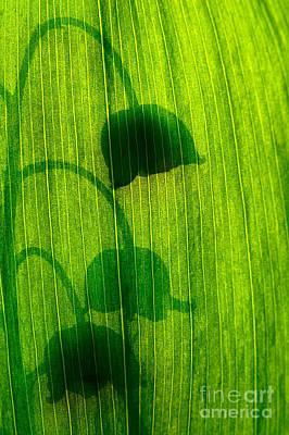 Shadow Poster by Odon Czintos