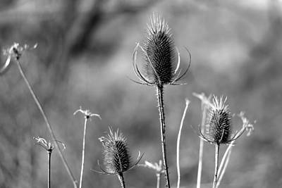 Poster featuring the photograph Simply Thistle by Rick Morgan