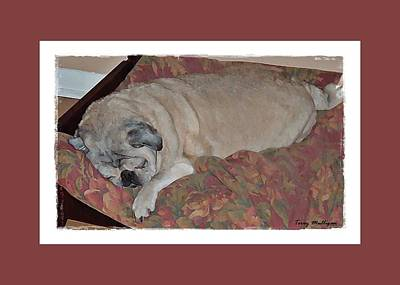 Sleeping Pug Poster by Terry Mulligan