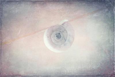 Snail Still Life Poster