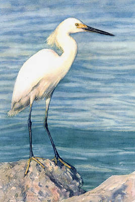 Snowy White Egret Poster by Shawn McLoughlin