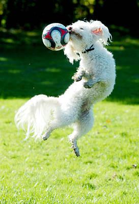 Soccer Dog-6 Poster by Steve Somerville