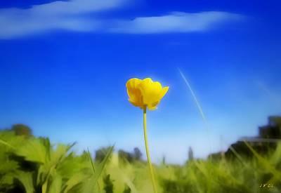 Solitary Flower Poster