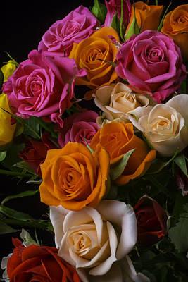 Spray Roses Poster
