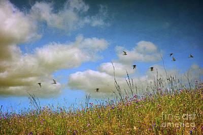 Spring Field Poster by Carlos Caetano