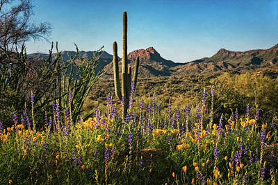 Poster featuring the photograph Spring In The Sonoran  by Saija Lehtonen