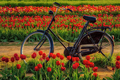 Poster featuring the photograph Springtime Tulips And Bike by Susan Candelario